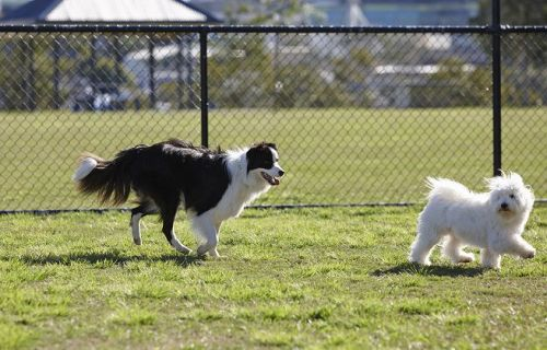 area-cani